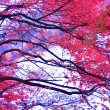 Stock Photo: Black Tree Silhouette With Well Saturated Red Leaves