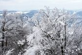 Gefrorenen zweige im winterwald in der tschechischen republik — Stockfoto