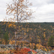 Birch on Rocky Ridge in Autum, Finland — Stock Photo