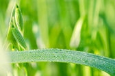 Drop on the grass — Stock Photo