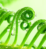 A macro of tendril on plant — Stock Photo