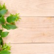 Wooden texture and green leaves — Stock Photo