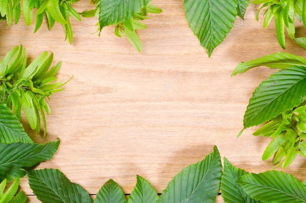 天然橡木木材纹理和鹅耳枥绿色叶子