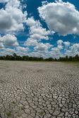 сухие и потрескавшиеся кровать водно-болотных угодий — Стоковое фото