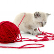 Cute kitten and red yarn — Stock Photo