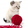 Cute kitten and red yarn — Stock Photo #12534280