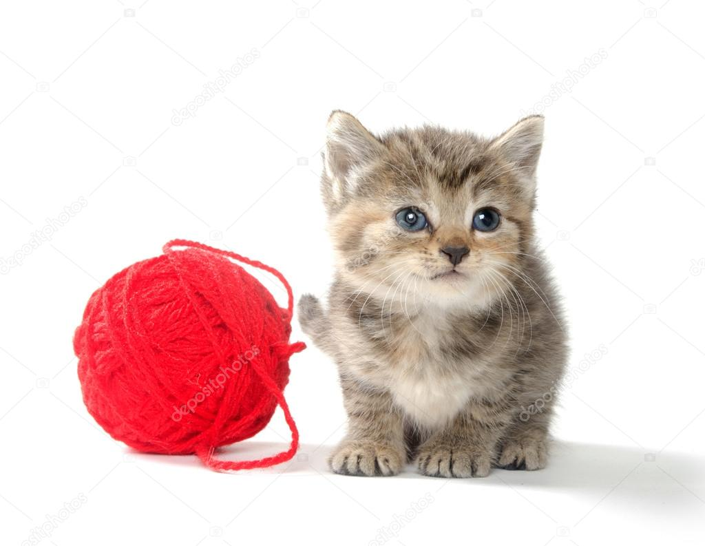 Two Kittens Playing With Yarn | www.imgkid.com - The Image ...