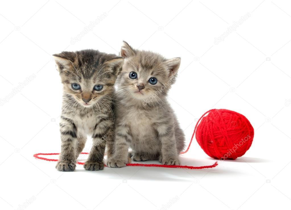 壁纸 动物 猫 猫咪 小猫 桌面 1023_740
