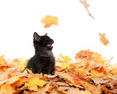 Cute black kitten and leaves — Stock Photo