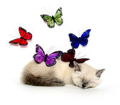 Sleeping kitten and colorful butterflies — Stock Photo