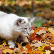 Cute white cat in leaves — Stock Photo