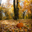 Pumpkin in fall leaves — Stock Photo