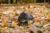 Cat in fall leaves — Stock Photo