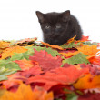 Black kitten and leaves — Foto de Stock