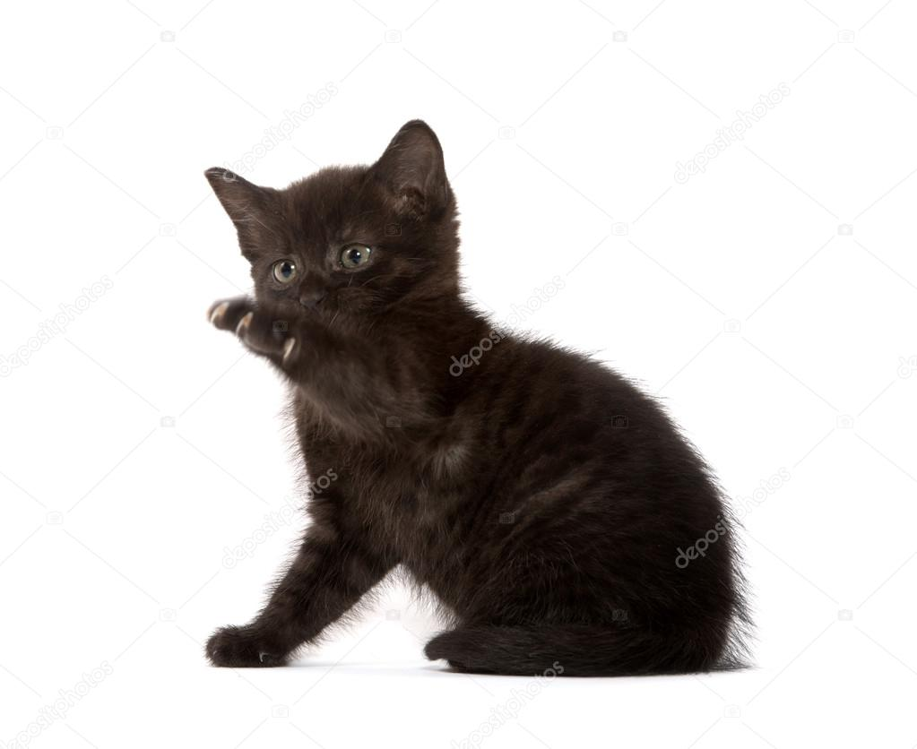 可爱的小宝贝黑色小猫在白色背景上播放 — 照片作者 eei_tony