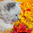 Cute kitten and flowers — Stok fotoğraf