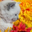 Cute kitten and flowers — Stock Photo