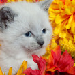 Cute kitten and flowers — Stock fotografie