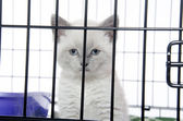 Kitten in a cage — Stock Photo