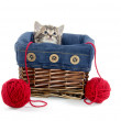 Tabby kitten in a basket — Stock Photo