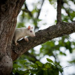 White squirrel — Stock Photo