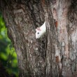 White squirrel — Lizenzfreies Foto