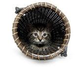 Cute tabby kitten in basket — Stock Photo