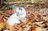Cute kitten in leaves — Stock Photo