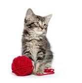 Tabby kitten with yarn — Stock Photo