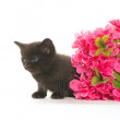 Black kitten and red flower — Stock Photo #48178001