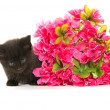 Black kitten and red flower — Stock Photo #48178037