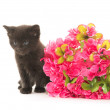 Black kitten and red flower — Stock Photo #48178125