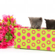 Kittens in a box — Stock Photo #48178173