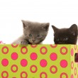 Kittens in a box — Stock Photo #48178211