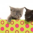 Kittens in a box — Stock Photo #48178239