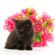 Black kitten and red flower — Stock Photo #48178311