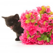 Black kitten and red flower — Stock Photo #48178329