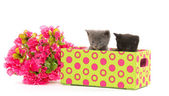 Kittens in a box — Stock Photo