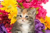 Cute baby kitten and flowers — Stock Photo