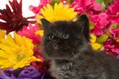 şirin bebek kedi ve çiçekler — Stok fotoğraf