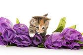 Słodkie maleństwo kociak i kwiaty — Zdjęcie stockowe
