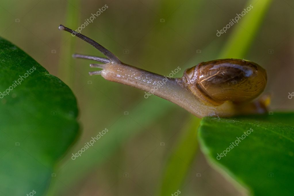 Snail moving from one leaf to another --- represent taking a big step or risk to move away from current position — Foto Stock #13382894