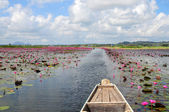 Lake full of lotus and water lily — Stock Photo