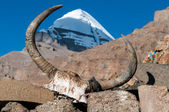 Yak skull — Stock Photo