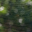 Spider web — Stock Photo #21710193