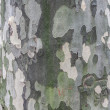 Tree bark — Stock Photo #23662859