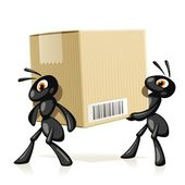Ants Delivery — Stock Vector