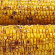 Broiled Sweet Corns — Stock Photo #12580073