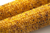 Broiled Sweet Corn — Stock Photo