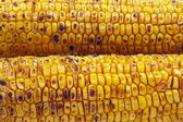 Broiled Sweet Corns — Stock Photo
